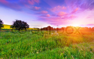 Summer landscape in the meadow. Sunset