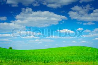 hill field