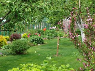 Billede af 'haven, blomst, græsplæne'