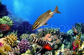 Exotic fishes, Underwater world and Tropical paradise