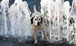 Dog on a hot summer day. Refreshed in the water of a fountain
