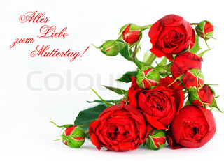 beautiful red roses on a white background with space for text. card concept