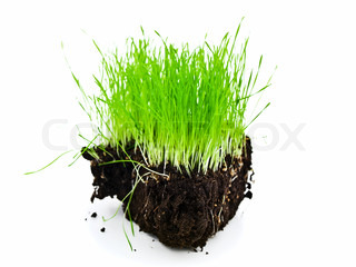 rich green grass island with black soil against white background