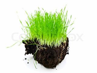 rige grønne græs ø med sorte jord mod hvid baggrund