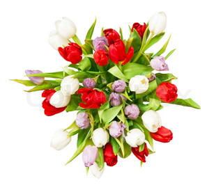 bouquet of beautiful tulips on white