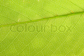 close-up of green leaf tree