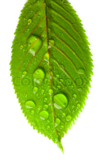 close-up of green leaves with large drops of water