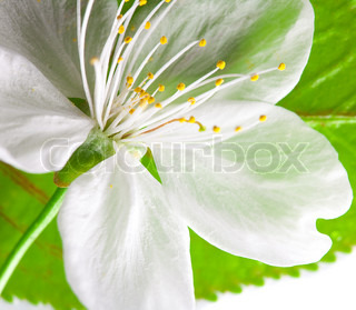 close-up of green leaf and white flower