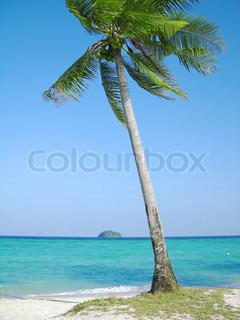 Lonely kokosnød træet på den tropiske strand