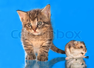 Portrait of a kitten and a hamster on the blue background