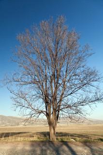 Gamle nøgne træ på lys blå himmel baggrund