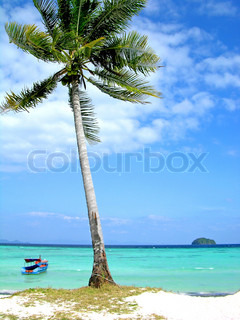Coconut palm on the beach. Andaman sea, Lipe island, Thailand