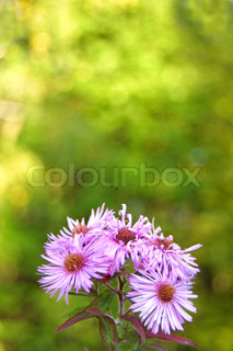 Purple flowers on yellow-green background