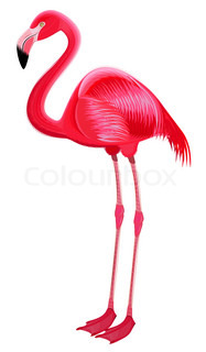 Red flamingo on a white background