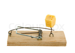 Mousetrap with cheese. The adaptation for catching mice and other fine rodents