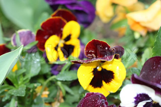 Image of 'flower, spring, green'