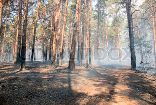Big fire of trees in a wood with a smoke and a flame