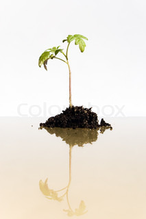 Young plant grows from the earth (conception of a growth)