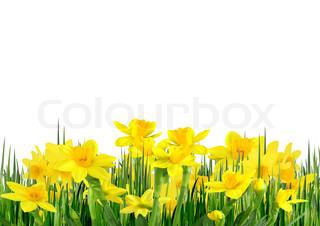 Forår blomster og græs på en hvid baggrund