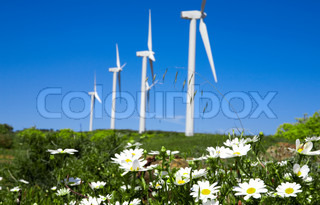 wild daisy  against  blue sky with giant Wind turbine as background
