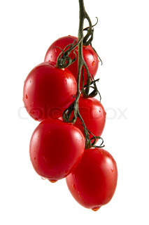 Hanging truss of five fresh vine tomatoes isolated on white background