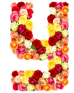 Z Alphabet In Rose Letter Y - flower alphabet isolated on white background | Stock Photo ...
