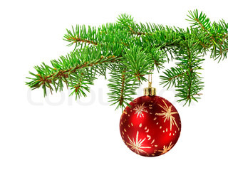 Red ball hanging on a green christmas tree branch, isolated