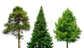 Tre forskellige træer isoleret på hvidt