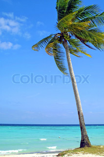 Kokos palme på stranden , Lipe Island , Thailand