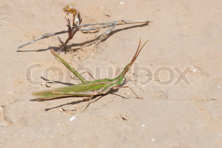 Insects on a sand in the desert