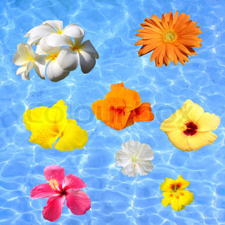 Tropical flowers floating in blue water