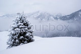 One pine tree in winter mountains