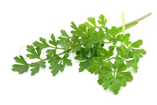 fresh-picked parsley