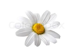 Billede af 'blomstre, Blomst, Plant'