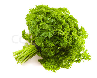 isolated big banch of a parsley