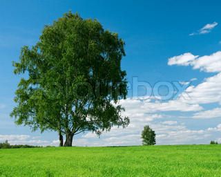 one green tree under blue sky with cloud by summer