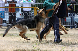 training of official dogs