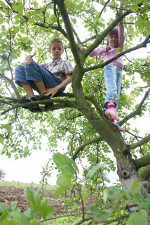 Children sit on a tree