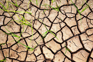 Green plants growing from the cracked earth
