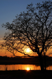 Sunset and tree silhouette under forest lake