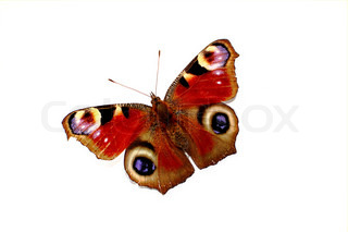 Colorful butterfly isolated on white background