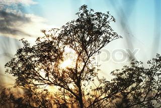 silhuet af en stor steppe plante mod blå solnedgang himmel