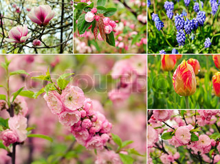 Collage from six images with spring flowers