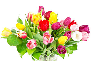 bouquet of colorful fresh tulip flowers