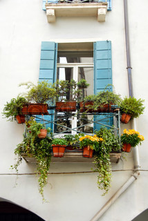 terrace and window of building in Italy, Padova, with flowerpots and blooming flowers