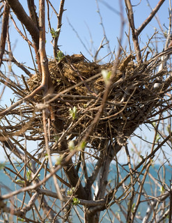 Bird nest on tree in front of the sea