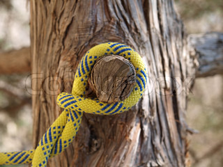 rope on a broken branch