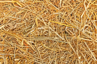 The texture of dry wheat yellow straw