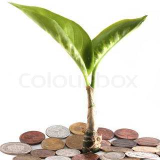 Young plant over a coins isolated on white background