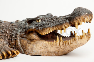 Crocodile head with the mouth large open - isolated object with clipping path